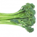 Cora Seeds - Broccoli