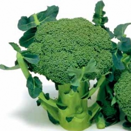Broccoli - Marathon F1