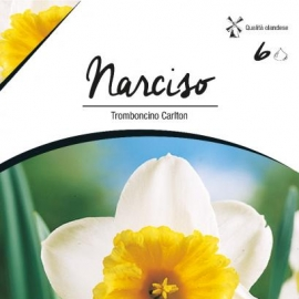 Narcise - Narcise Trumpet Carlton