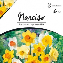 Narcise - Narcise Trumpet Large Cupped Mix