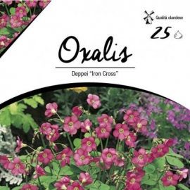 Bulbi diversi - Oxalis Deppei Iron Cross