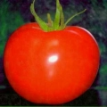 Esasem - Tomate determinate cu fruct rotund